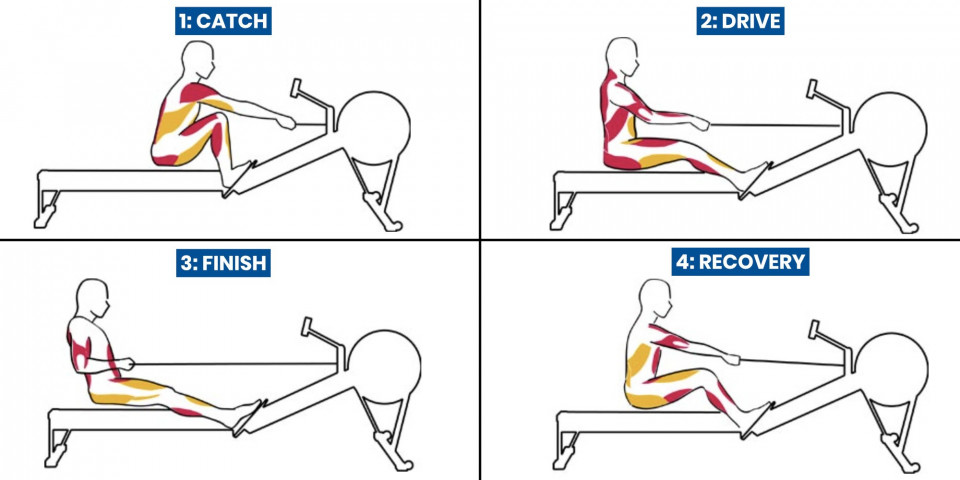 Rowing muscles used